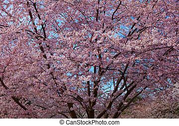 花, 春, さくらんぼ