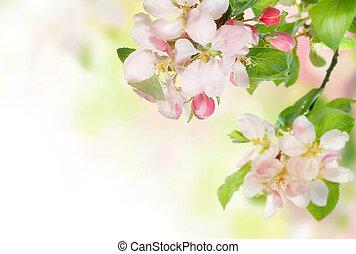 花, 春, ボーダー