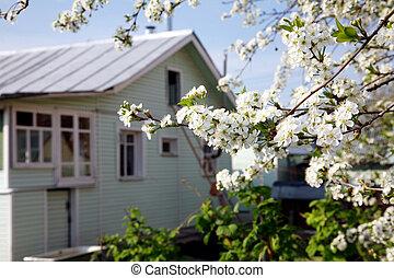 花, 春, 庭, 家