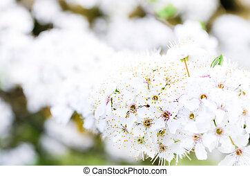花, 春, 木, の上, 細部, 咲く, 終わり