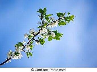 花, 春, 桜の木