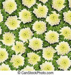 花, 春, 白