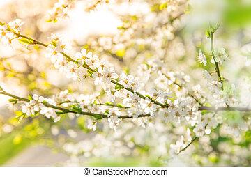 花, 春, 白, ボーダー, 背景