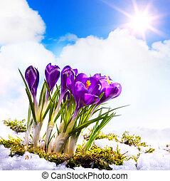 花, 春, 美しい