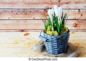 花, 春, 背景, クロッカス