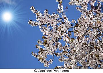 花, 春, 背景