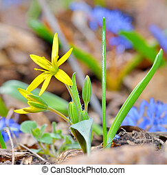 花, 春, 黄色