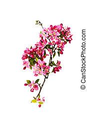 花, 木, アップル, カニ
