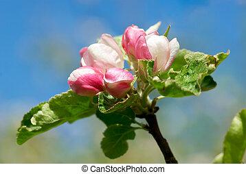 花, 木, アップル