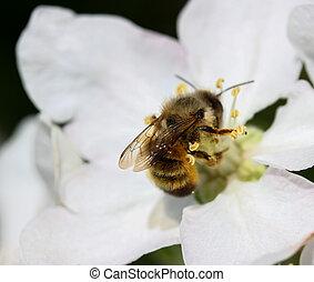 花, 木, 蜂
