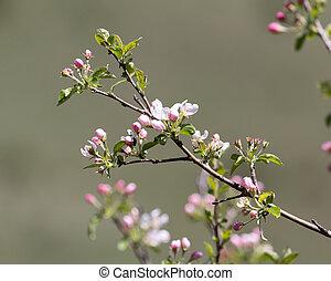 花, 果樹, 自然