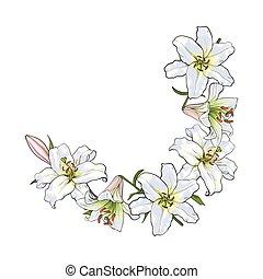 花, 框架, 元素, 裝飾, 一半, 白色的百合, 輪