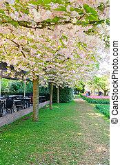 花, 桜の木
