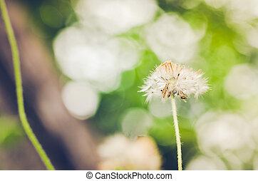 花, 植物
