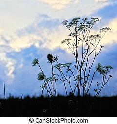 花, 植物, 黑色半面畫像, 針對, 傍晚