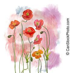 花, 水彩画, ケシ