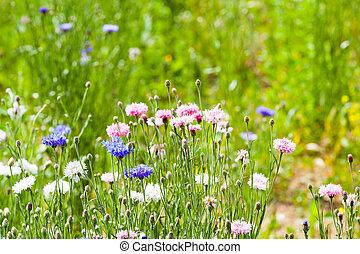 花, 牧草地