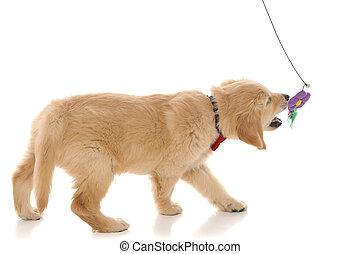 花, 犬, かわいい, わずかしか, 金 レトリーバー, おもちゃ, 遊び