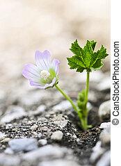 花, 生長, 從, 裂縫, 在, 瀝青