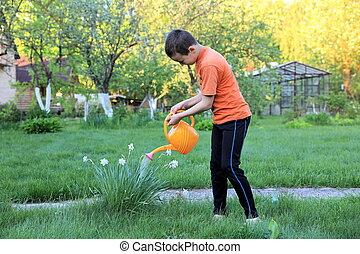 花, 男の子, 水まき, 屋外で