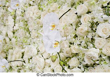 花, 白い花, 背景