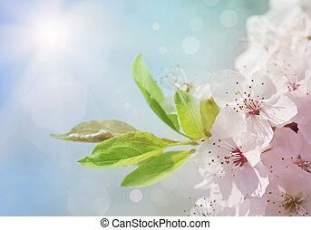 花, 白, 木