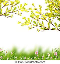 花, 白, 背景