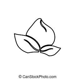 花, 白, 黒, silhouettte