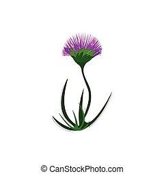 花, 紫色, イラスト, 色, ベクトル, ∥あるいは∥