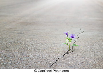 花, 紫色, テキスト, ひび, フォーカス, 通り, ブランク, 成長する, 柔らかい