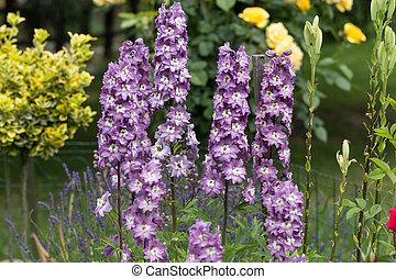 花, 紫色, ヒエンソウ, 庭