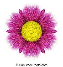花, 紫色, 隔離された, 万華鏡のようである, デイジー, 白, mandala