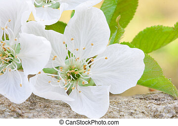 花, 終わり, 写真, の, ∥, 花, ∥で∥, 活気に満ちた, 色