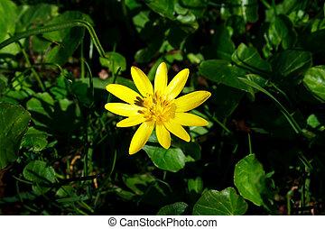 花, 緑の草, 黄色