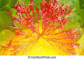花, 緑の赤, 背景