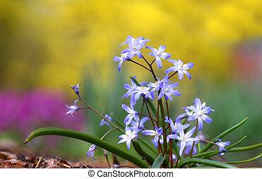 花, 美しい