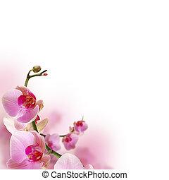 花, 美しい, 蘭, ボーダー, 花