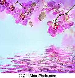 花, 背景, の, トロピカル, ラン