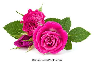 花, 背景, ピンク, 花束, 隔離された, バラ, 切抜き, 白