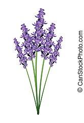 花, 背景, 束, ラベンダー, 紫色, 白
