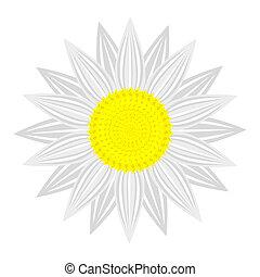花, 背景, 白色