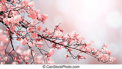 花, 背景, 美しい, 春, 自然, sakura