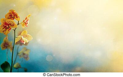 花, 背景, 蘭