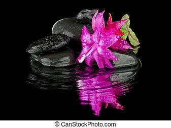 花, 色, ピンク, 石, 上に, a, 黒い背景