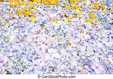 花, 花弁, 背景