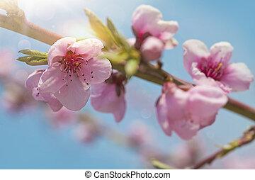 花, 花, 桃