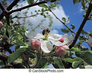花, 花, 蜂