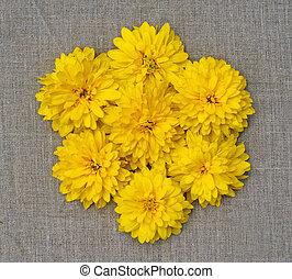花, 花, 黄色, 形態, 構成