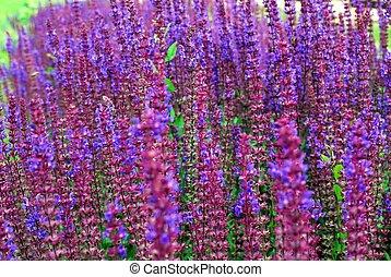 花, 草, 緑の背景, すみれ