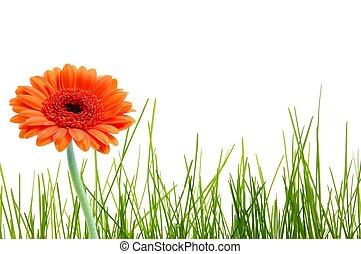 花, 草, 隔離された